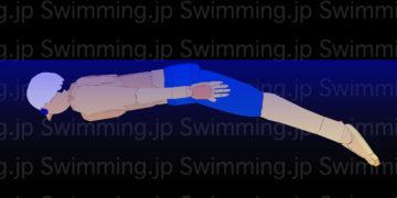 バタフライ ドルフィンキックの泳ぎ方(初級者向け)