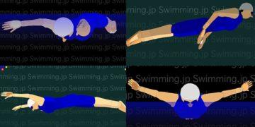 バタフライ日本女子トップアスリートの泳ぎ方(26方向からの3Dアニメーション)