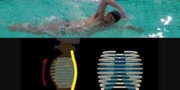 クロール 楽に泳ぐための息継ぎの量(初級者〜上級者向け)